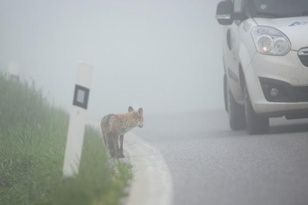 foggy road driving